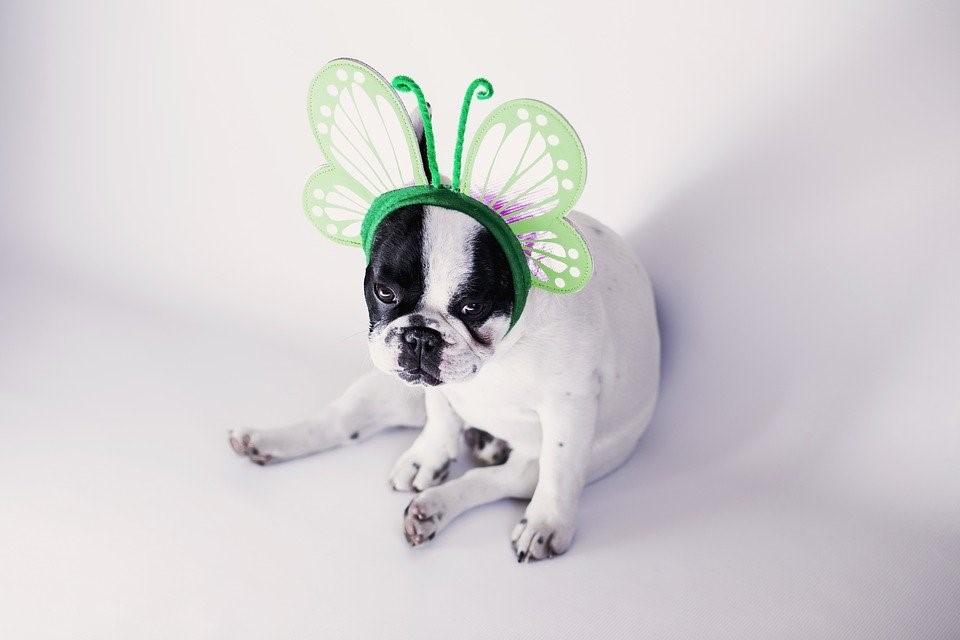Tipps für den Frühling mit Hund