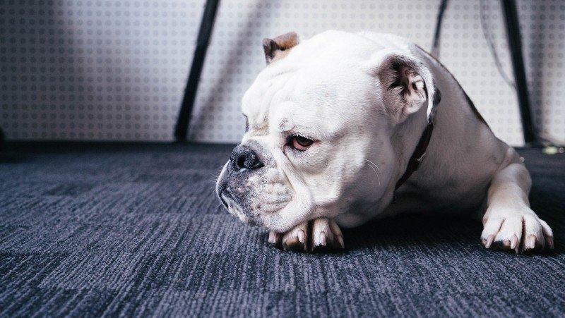 Allgemeinen Ängste bei Hunden