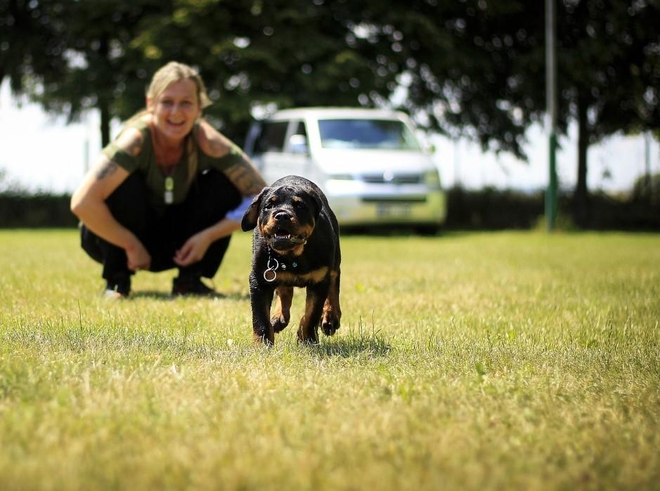 Rottweiler als Familienhund