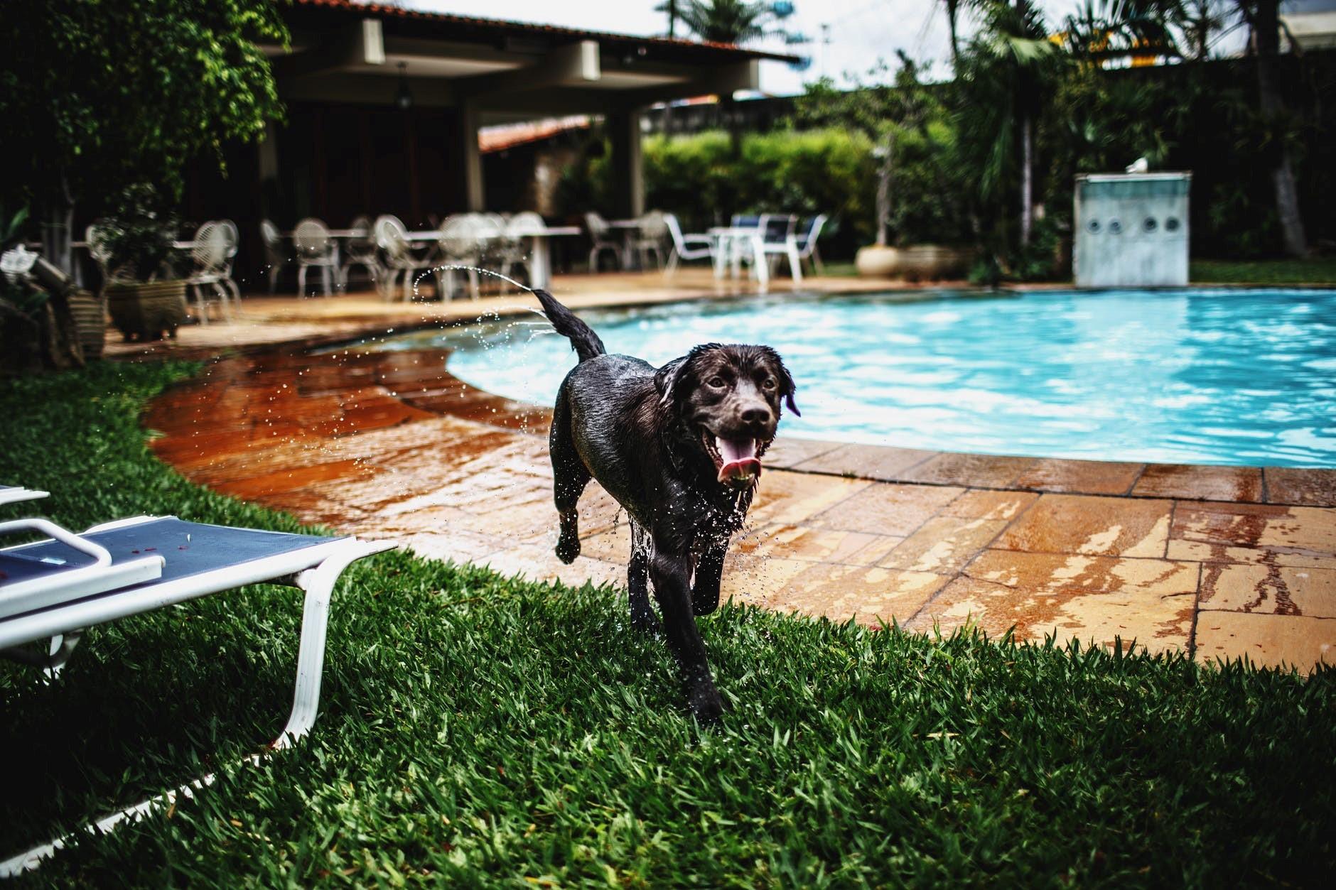 Welche Hunde baden gerne?