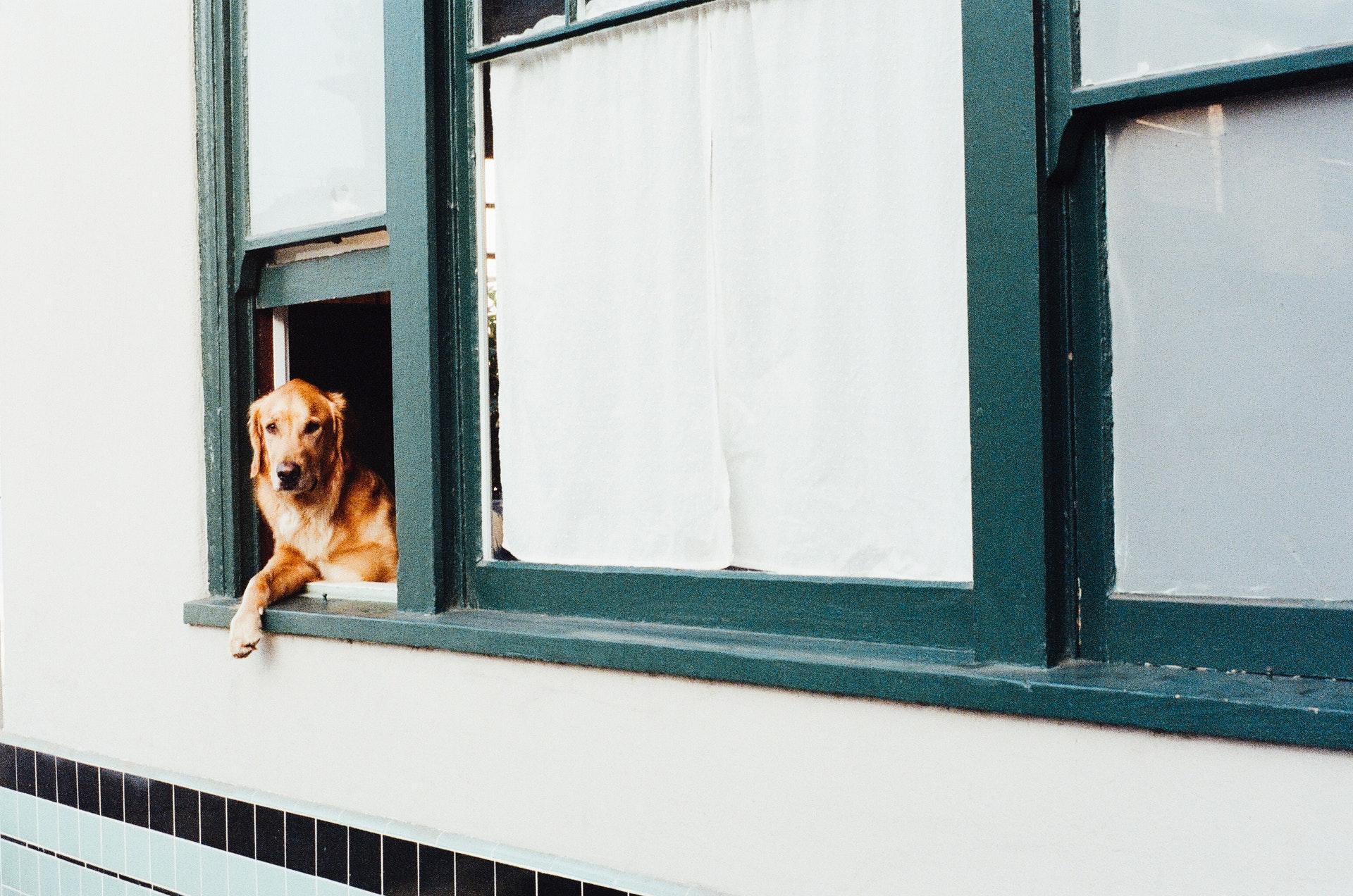 8 Hunderassen, die sehr beschützend sind