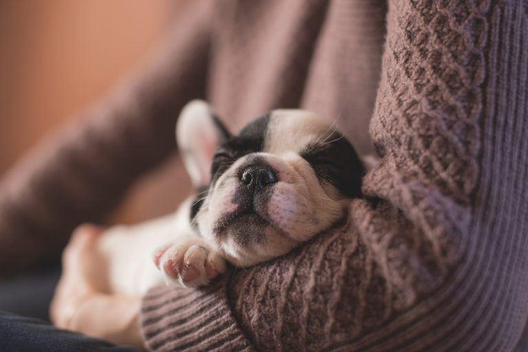 5 Tipps: Ein neuer Hund zieht ein