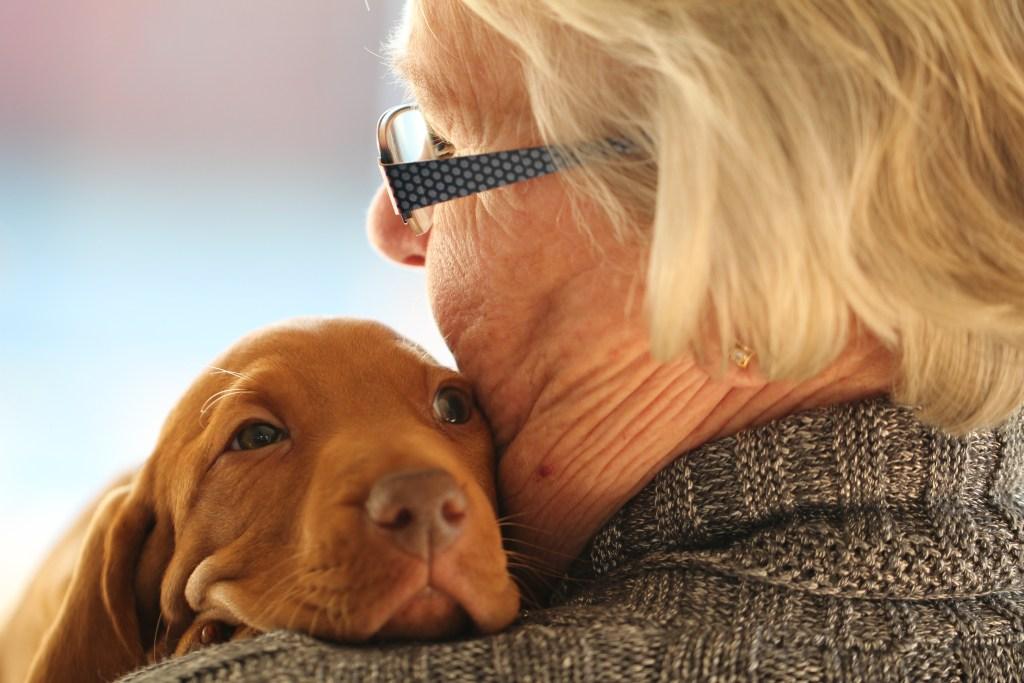 Top 5 Hunderassen für Rentner und ältere Menschen