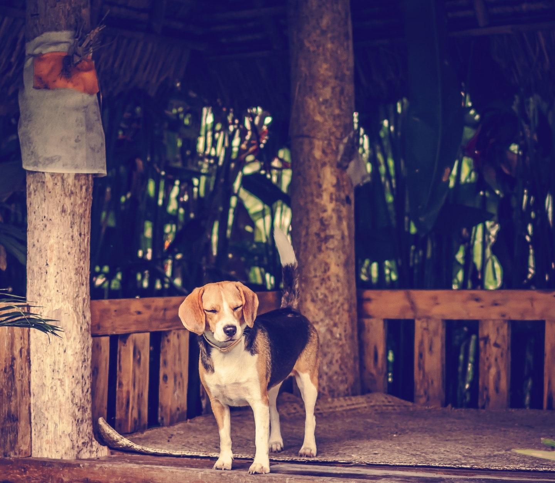 Die 10 besten Hunderassen für Wohnungen